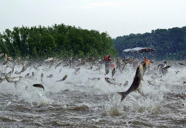 2016 Asian Carp Action Plan Released