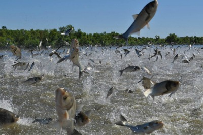 Maritime Group Urges Congress To Fund Carp Efforts